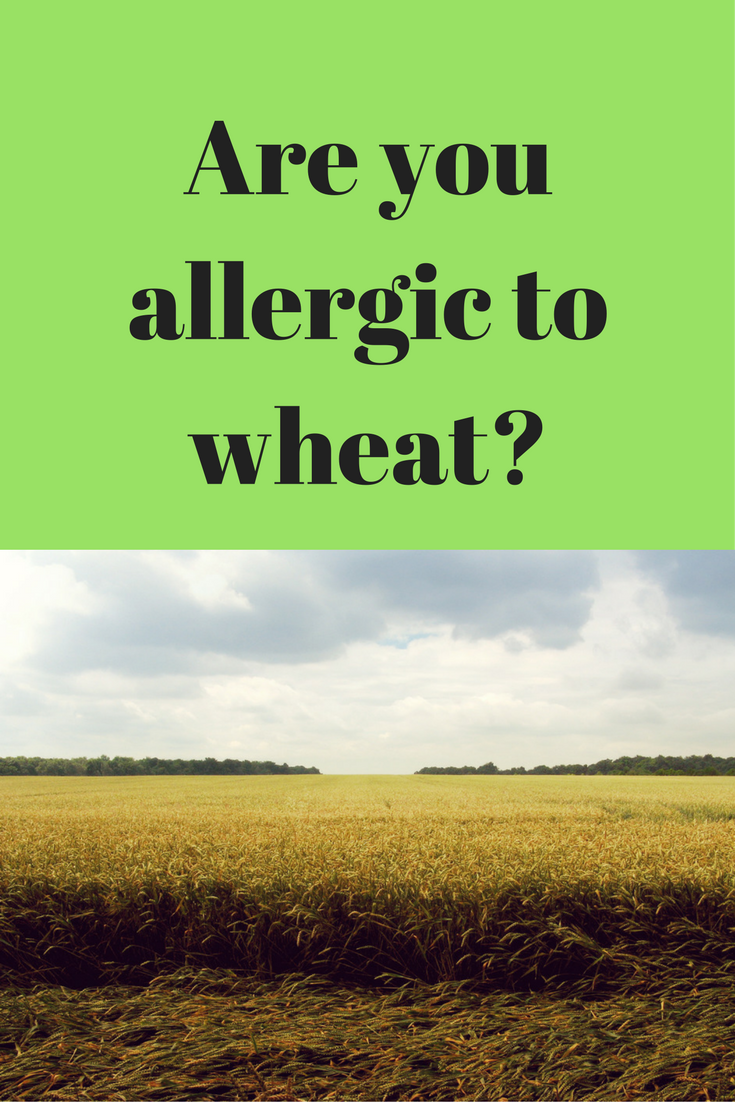 allergic to wheat