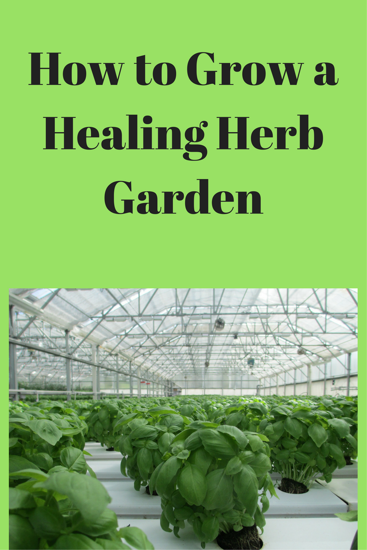 How to Pretty Up Your Space with a Healing Herb Garden