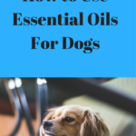 How to Use Essential Oils for Dogs