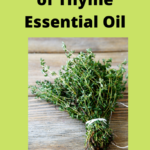 Powerful Uses of Thyme Essential Oil