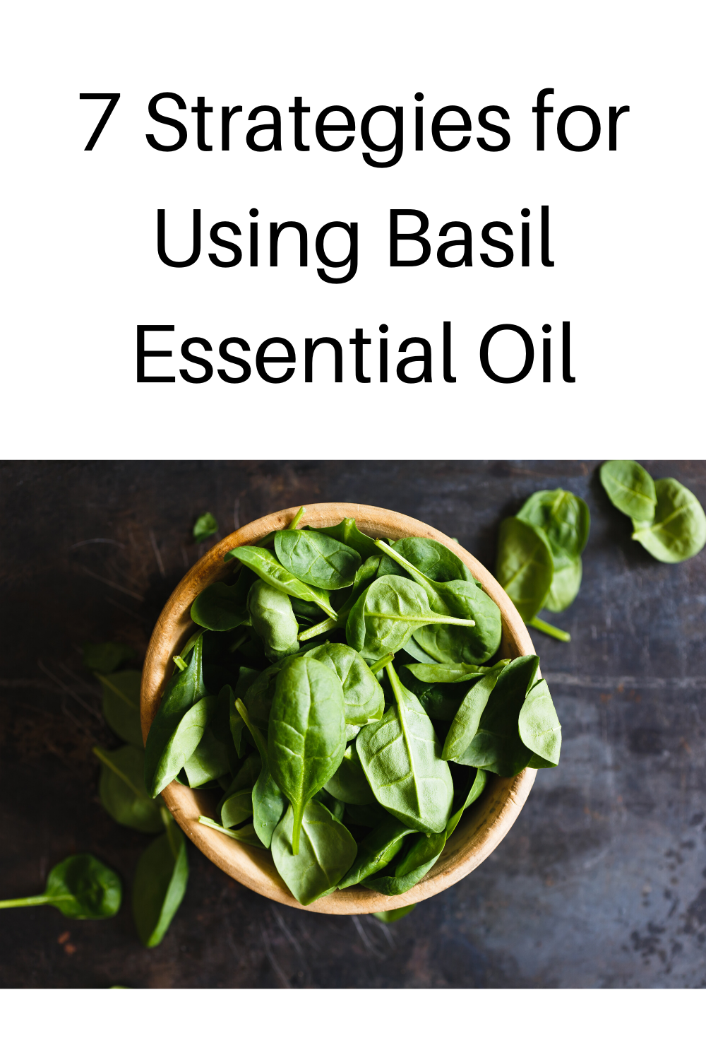 using basil essential oil